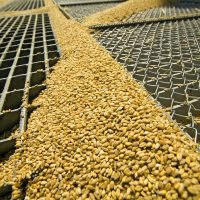 Grain price: This month's USDA supply and demand estimates are out