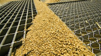 Grain price: Grain production estimated down