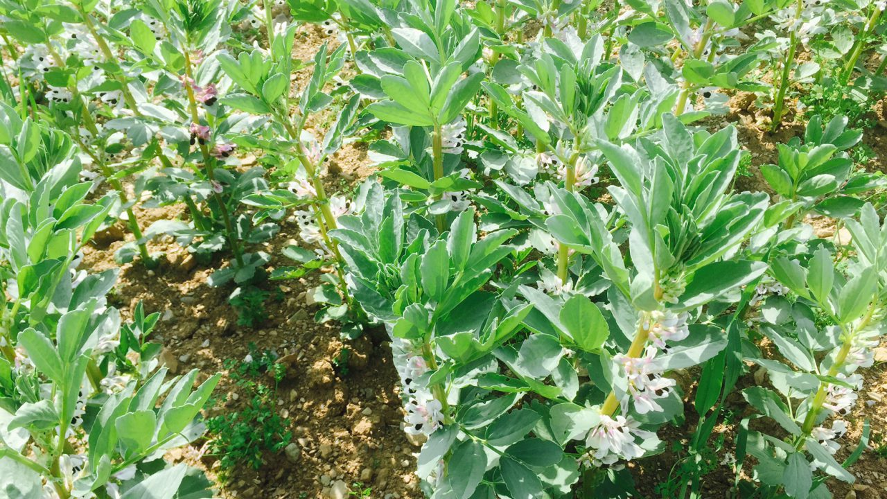 'Organic tillage farmers need more supports'