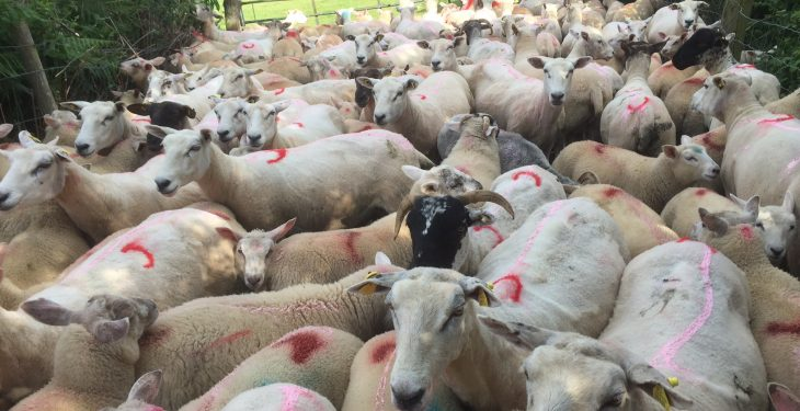 Farm census: 1,000 more farm jobs than 2016 and sheep make a comeback
