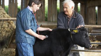 Vets: Serious concern over changes to 'ownership of practices' and impact on animal health