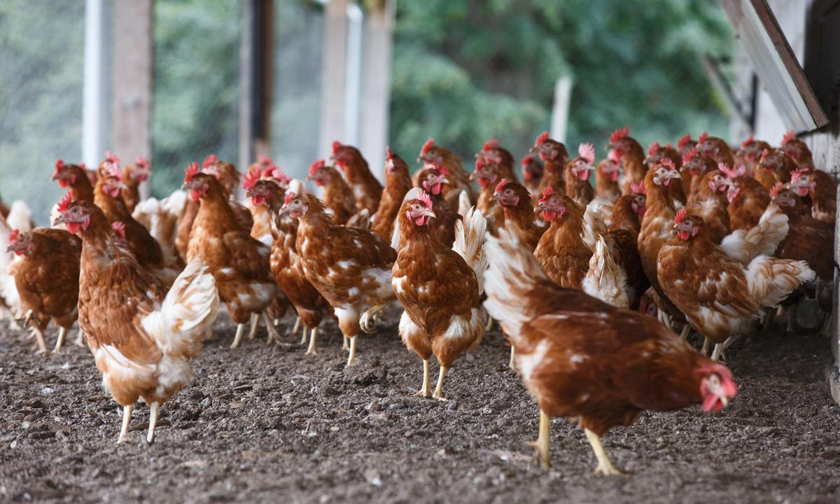 IFA Poultry Chairman questions Department's  bird flu advice