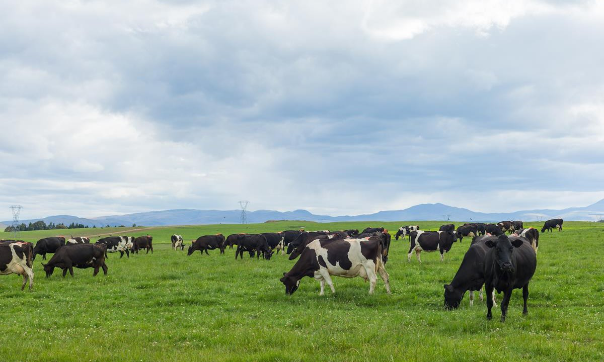 Agricultural emissions rise as Ireland misses GHG target again – EPA