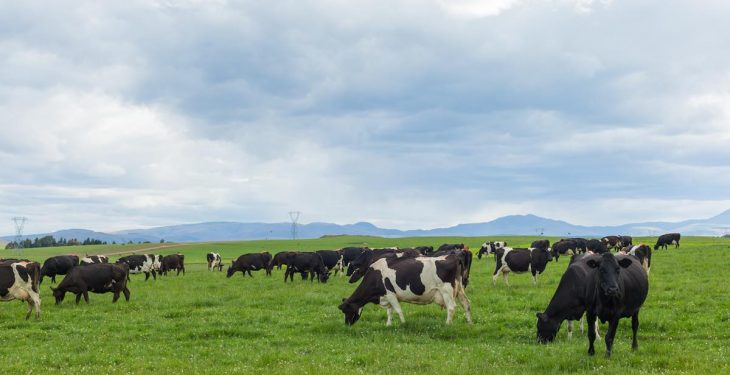 Fonterra Australia cuts milk price for new season due to 'market conditions'