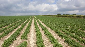 Ireland produced only 0.6% of the EU's potatoes in 2014