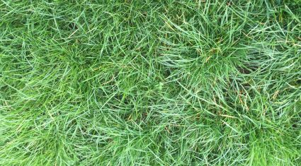 Two new herbicides for grassland farmers