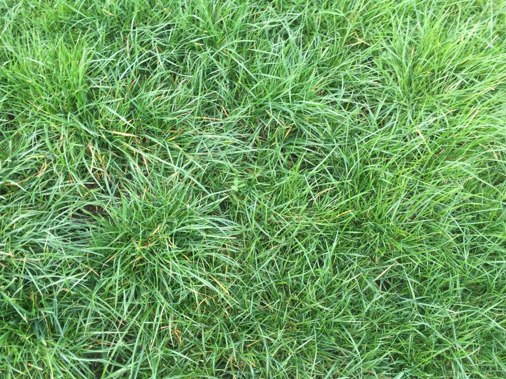 800kg grass cover March 16