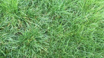 Reseeding: What grass varieties should I use?