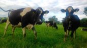 Agricultural emissions pose challenge for economic competitiveness
