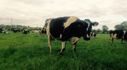 November milk price in the North close to 6c/L higher compared to 2015