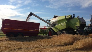 Video: Harvest 2016 gets underway with initial reports of yields down 20%
