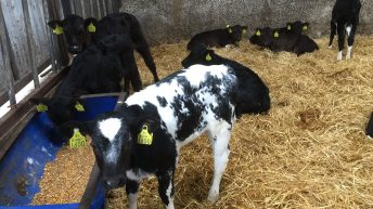 Dairy calf births jump 6% as expansion continues to drive growth