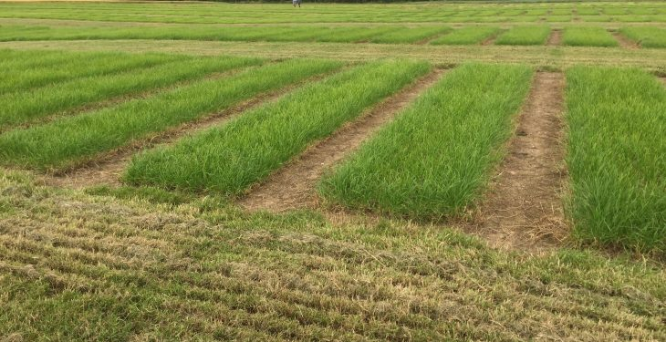Video: Is reseeding the only way to boost the perennial ryegrass content of your swards?