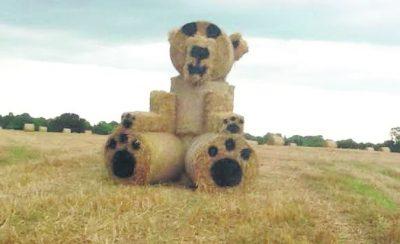 Mountbellew-Teddy-Bear