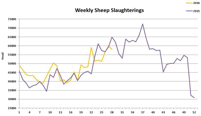 Sheep kill 2572016
