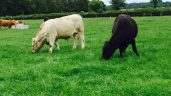 Organic beef farm talk and 'farm life' snapshots on show this week