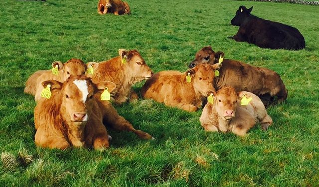 Over €300,000 paid out for BVD-infected animals born in 2015