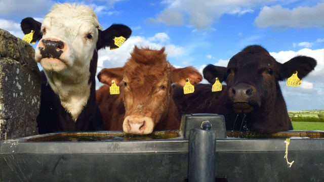Ciaran Fitzgerald: Agriculture needs to better promote its strong economic story