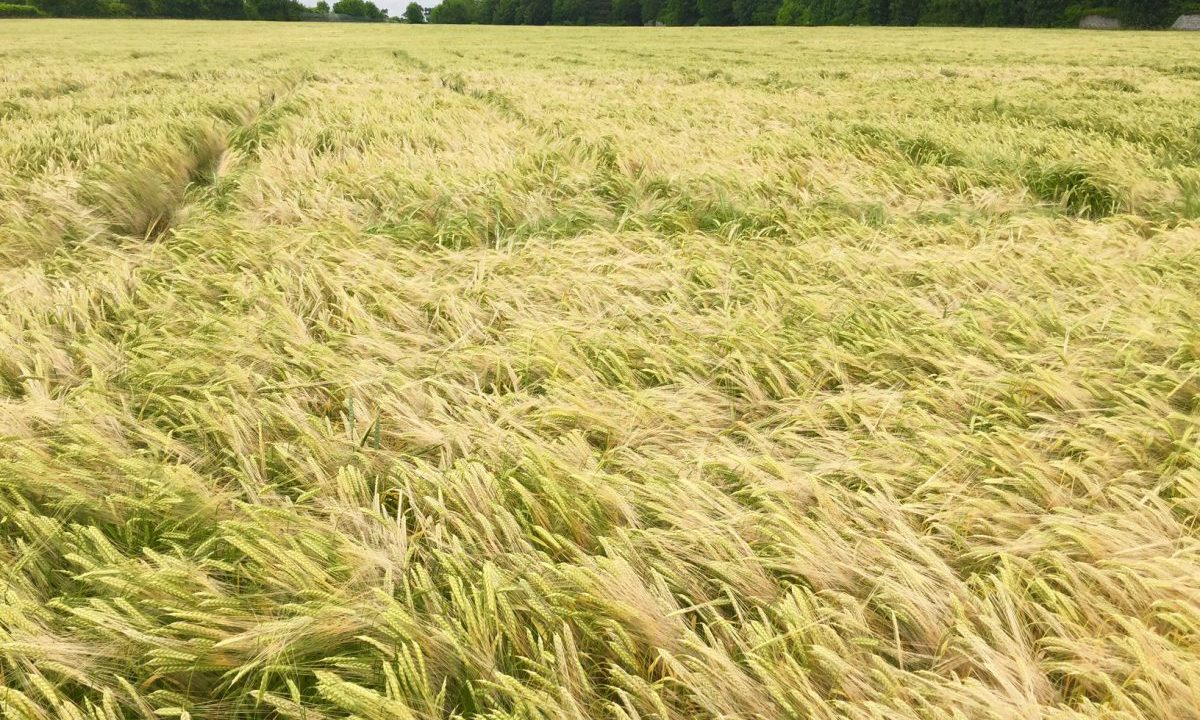 Tillage farmers facing negative returns on many crops this year
