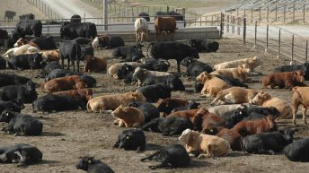 Weak US Dollar results in US beef imports dropping 10% year-on-year