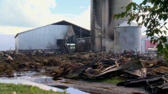 Video: Fire on family-run dairy farm kills 160 cows