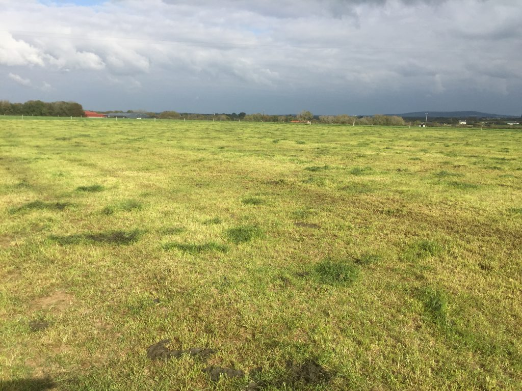 grazed grass cover Oct 15
