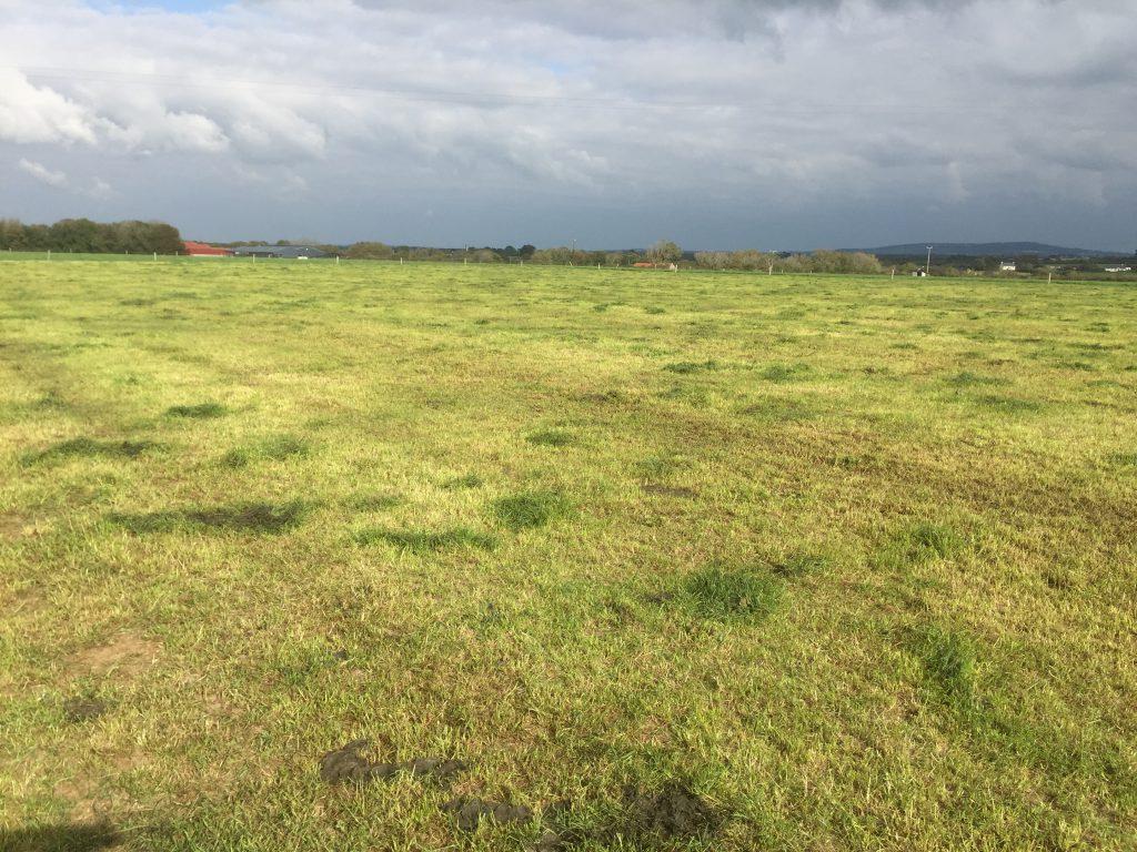 grazed grass cover Oct 15