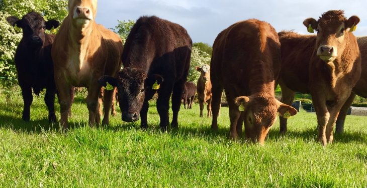 Irish R3 heifer prices 'third-highest in Europe'