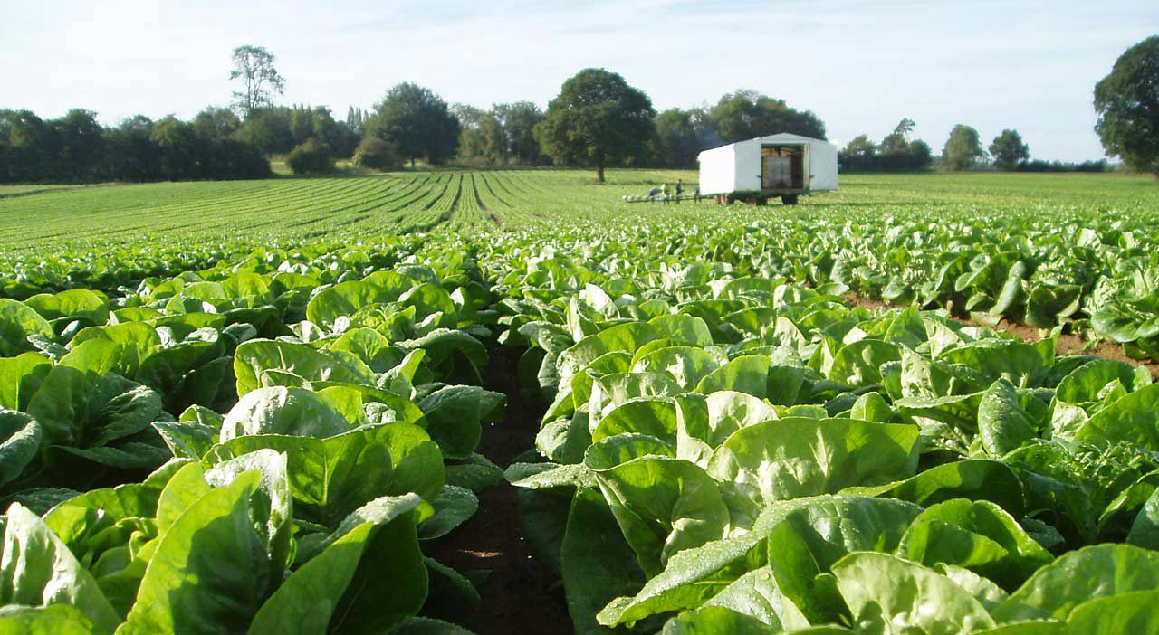 Tomorrow is the deadline to apply for the Horticulture Investment Aid Scheme