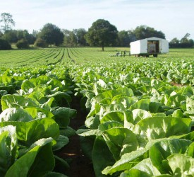 What was the value of Ireland's horticultural output in 2019?
