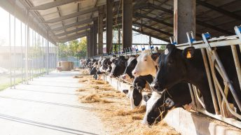 Inquiry into Australia's dairy industry to look at competition between processors