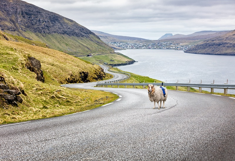 Video: Google recruits sheep to map out the Faroe Islands in the ...