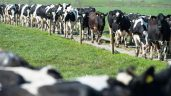 Average betway客户端dairy debt surpasses €118,000 in 2018