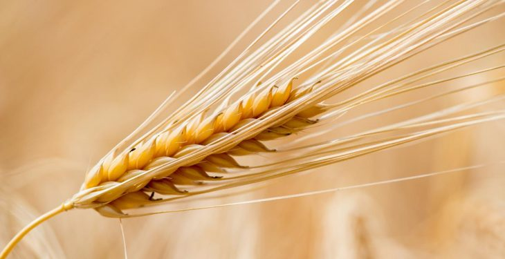 Test results show Irish grain is of better quality compared to imported grain