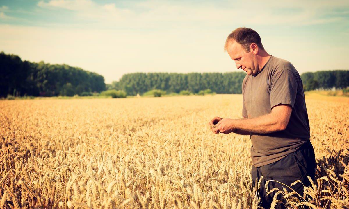 Cereal sector slump: 24% income fall a 'standout figure'