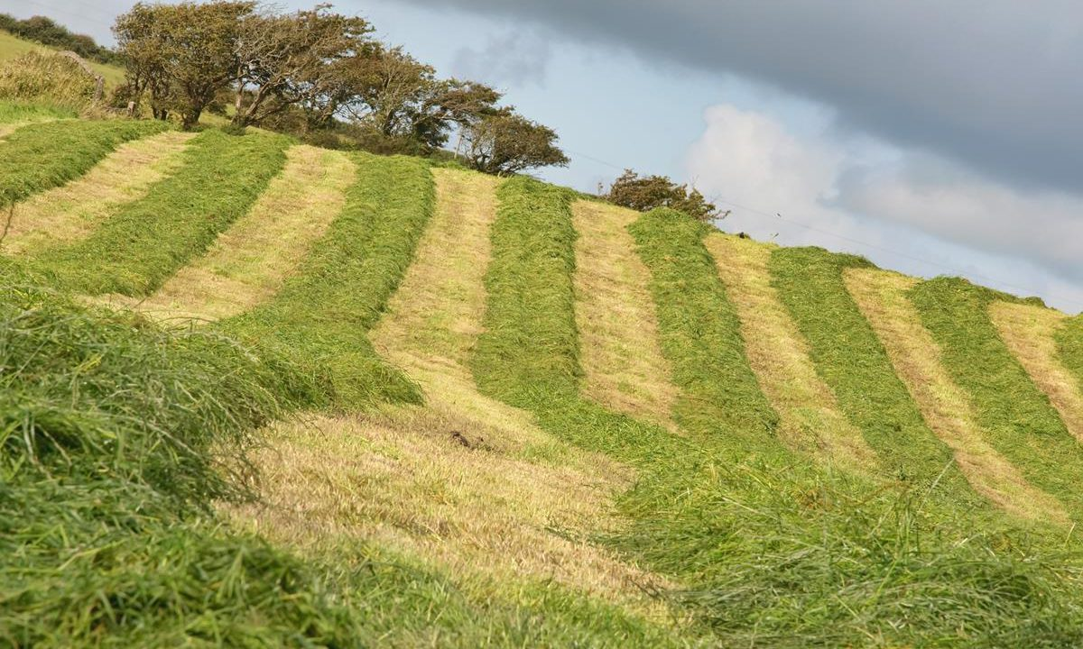 Silage on hold as unsettled weather to continue this week – Met Eireann