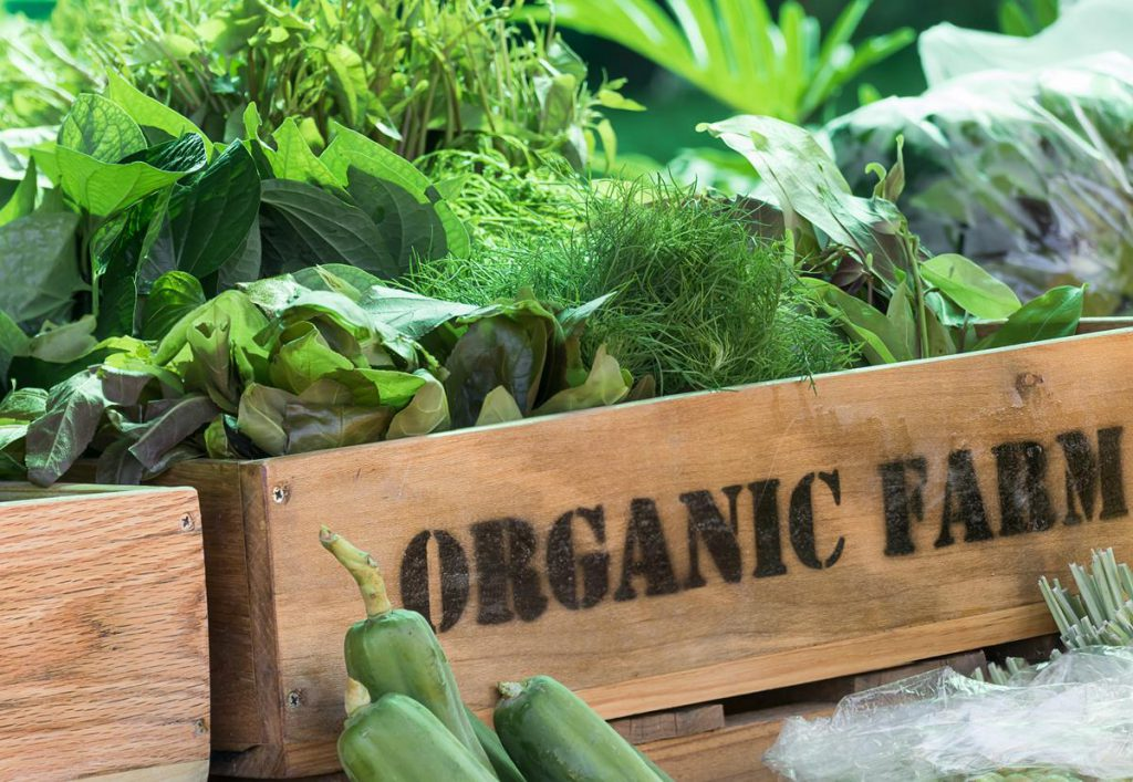 How To Grow Organic Food In Pots