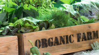 Less than 2% of land used for organic farming in Ireland