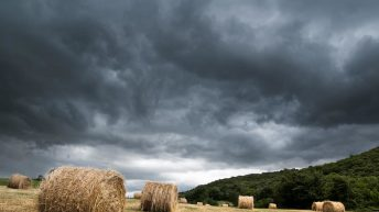 Healy calls on Government to assist farmers hit by weather losses