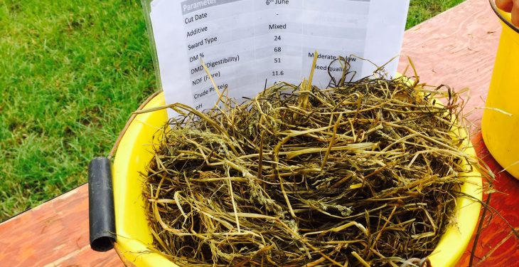 Silage quality shock on the cards for farmers