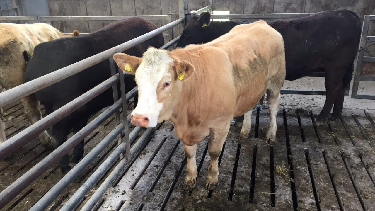 Cattle prices continue to drive forward – IFA