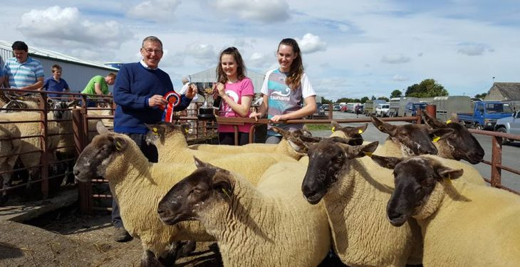 Ewe lambs sell to €159 in special breeding sales
