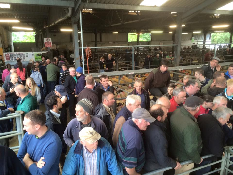 Buyers at Maam Cross Mart's Annual Mule ewe lamb sale