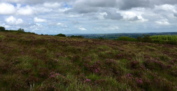 'Farmers' grazing rights must be respected after sale of Dublin Mountains land'