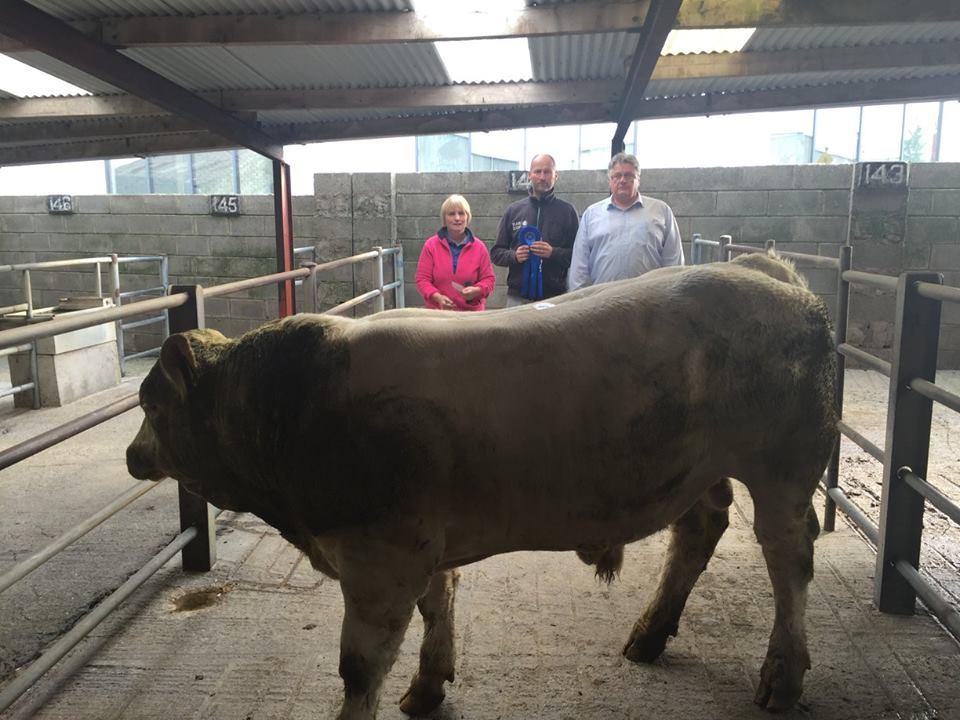 2nd Best Weanling Bull - 615kgs €1405 2nd. Thomas Flynn, Menlough, Ballinasloe, Co. Galway.