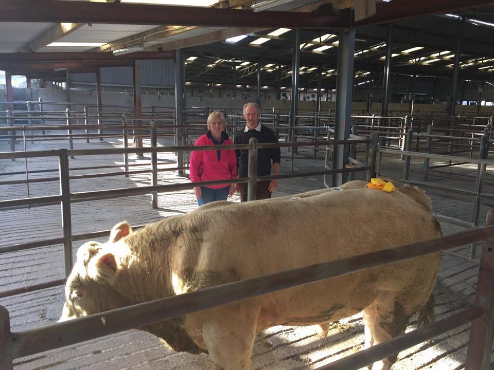 3rd Best Weanling Bull- 460kgs €1280. John Hegarty, Gortnadieve, Creggs, Co.Roscommon
