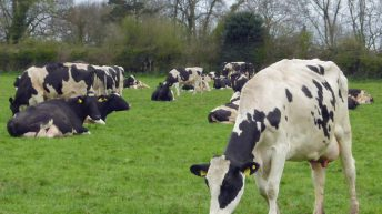 Could a 'white flu' be on the cards for liquid milk producers?