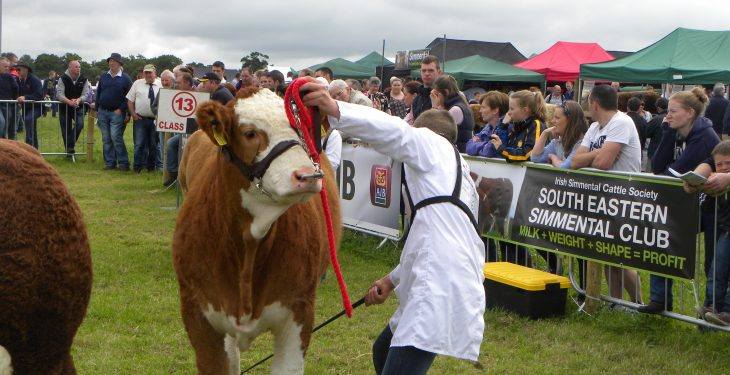Tullamore Show Results 2016: Cattle