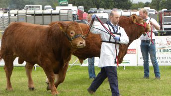 Pics: Thousands throng to the 2016 Tullamore Show