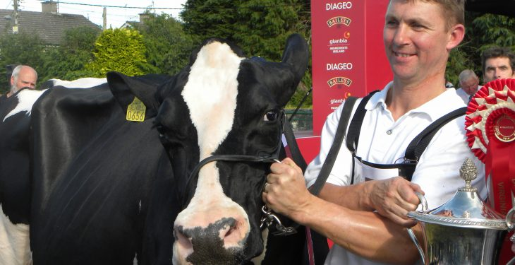Wexford breeder wins Diageo Baileys Dairy Cow of the Year